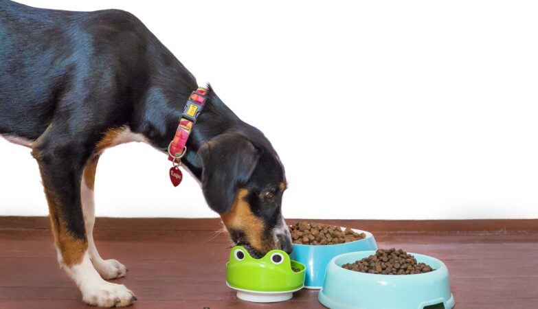 Why Buying Pet Food Online Is a Practical Solution to Modern Living